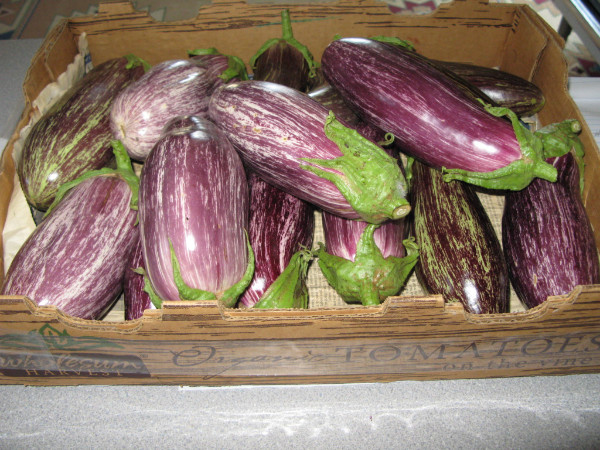 Beautiful Edirne Eggplant
