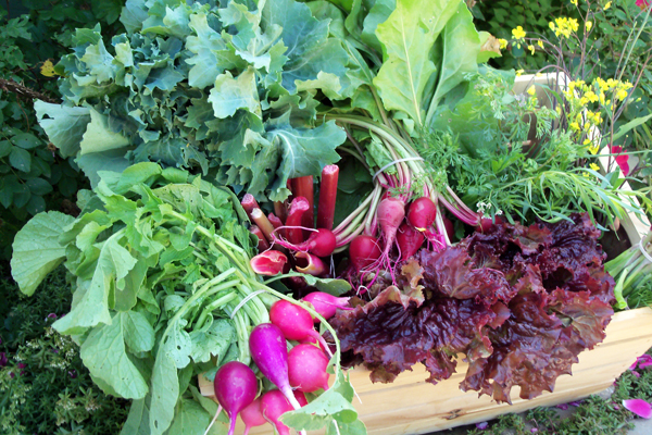 organic farm produce and vegetables, garden, kate rossetto, billings, montana