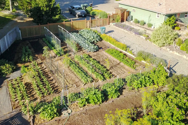 organic produce and vegetables, garden, kate rossetto, billings, montana